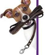 Biete liebevolle Hundebetreuung