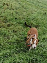 Hundebetreuung gesucht