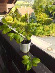 Pflanzen zu verkaufen