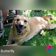 Butterfly - Bereit zur Metamorphose zum