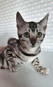 alle kitten 200 Euro