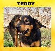 TEDDY - ist verspielt und sehr