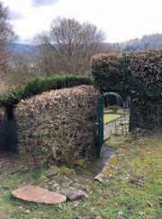 Hirschhorn angelegtes Grundstück im Wald
