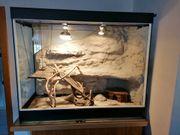 Terrarium mit selbst gebauter Rückwand