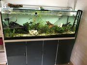 Aquarium Sonderanfertigung 500 Liter Fische