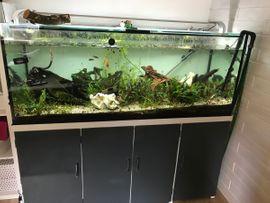 Aquarium Sonderanfertigung 500 Liter, Fische und viel Zubehör