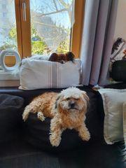 gegenseitige Hundebetreuung