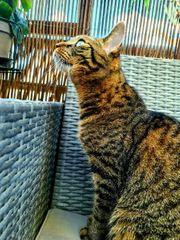 Katze Mia sucht neues zuhause