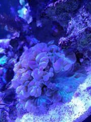 Meerwasser Auflösung Lebendgestein korallen kein