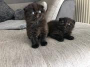 wunderschönen Kitten