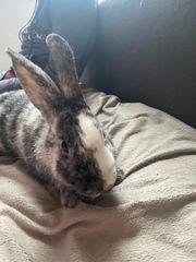 Kaninchen Hasen zur abgabe