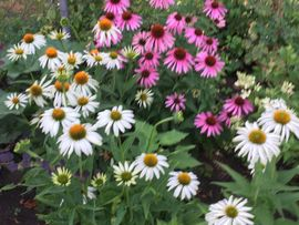 Gartenplanung Gestaltung Pflasterbau wir machen: Kleinanzeigen aus Osterhofen - Rubrik Dienstleistungen, Service gewerblich