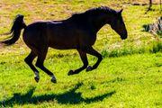 Offenstall- Platz für Pony Isländer