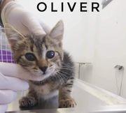 Oliver lieber Kater ca 3