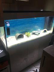 Aquarium Juwel 240l