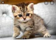 SUCHE Katzenbaby
