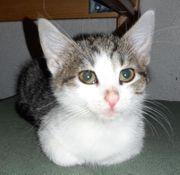 Baby Katze Kitten Mira sucht