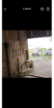 Einstellplatz Offenstall Rentner Pony