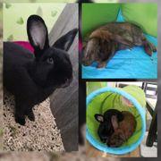 2 Kaninchen Riesenmixe 3 5