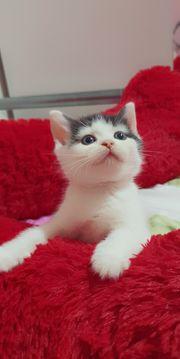 Katze weiblich