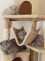 süße Kitten suchen zuhause