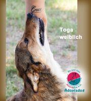 Toga - wir sind ein Team
