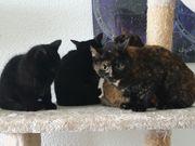 Katzenkinder Sally Suki Spooky Scotty