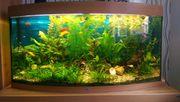 Juwel Vision Aquarium 180 Liter