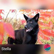 Stella - Sehnsucht soll nicht ihre