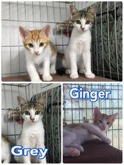 Katzen-Geschwister aus Tierschutz 16W