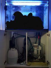 Aufgabe Meerwasseraquarium
