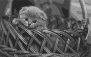 Vorlage für Ministeck BKH Kitten