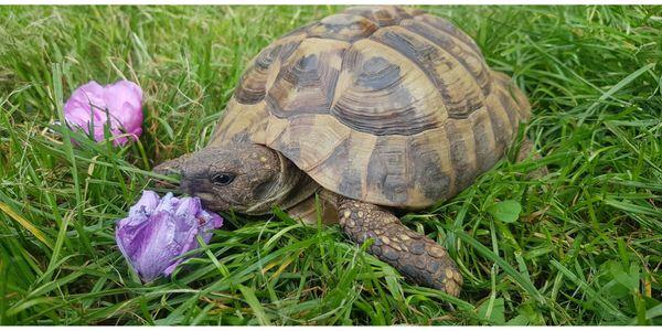 Schildkröte männlich sucht gutes Zuhause