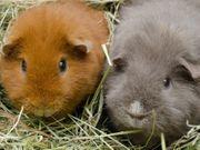 Natur - Wiesenheu für Kleintiere vom