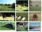 Jagdgelegenheit Jagd Abschuß Jagen Mitjäger