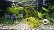 1 Aquarium 54l 60x30x30cm