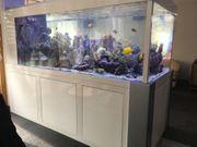 Einen Aquarianer zur Unterstützung - Meerwasser-
