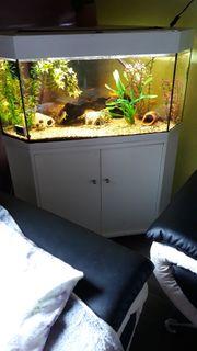 Eck Aquarium 190 Liter LED