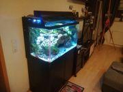 redsea maxx 250 Salzwasseraquarium Meerwasseraquarium