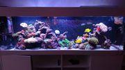 Meerwasser Aquarium komplett 600L 2m