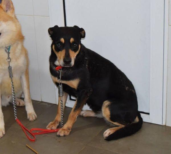 Zia1 Verlassene Mischlingshundin Auf Der Suche Nach Ihrem Zuhause