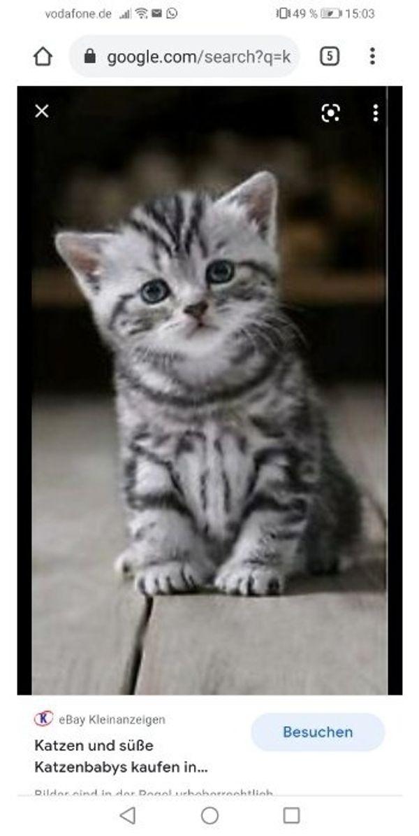 Katzenbaby gesucht für liebevolles zuhause