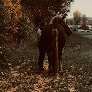 Reiterin sucht Anfänger- Herzenspferd gerne