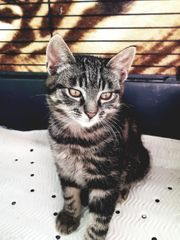 14 Wochen alt 2 Kitten