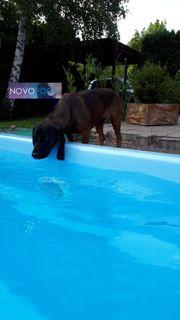 GFK Pool Romano 6 5x3