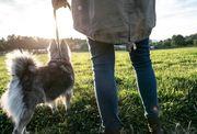 Gassi gehen mit Hunden