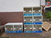 zuchtboxen