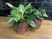 Blumentopf Übertopf für Zimmerpflanzen