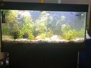 Aquarium Juwel 180 liter