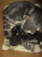 4 kleine Kitten
